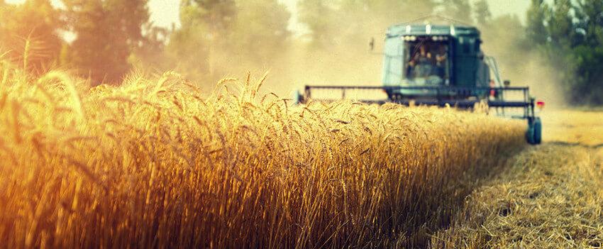 Remuneração no agro cresce mais que a da média brasileira