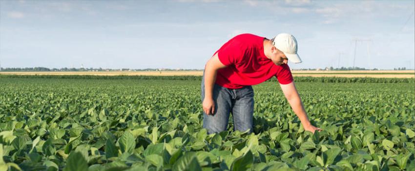Agropecuária registra saldo positivo de 36,8 mil postos de trabalho em junho