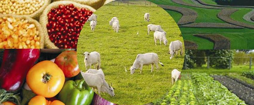 Agropecuária brasileira é reconhecida por sua sustentabilidade na Convenção-Quadro das Nações Unidas