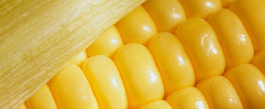 Milho: Bolsa de Chicago encerra sessão com baixas nesta 2ª