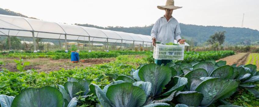Produtores de Santa Catarina podem comunicar perdas de alimentos devido à dificuldade de comercialização