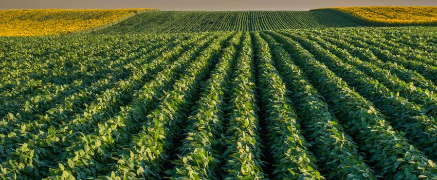 Garantia-Safra autoriza o pagamento de R$ 323,2 milhões para mais de 380 mil agricultores no ciclo da safra 2019/2020