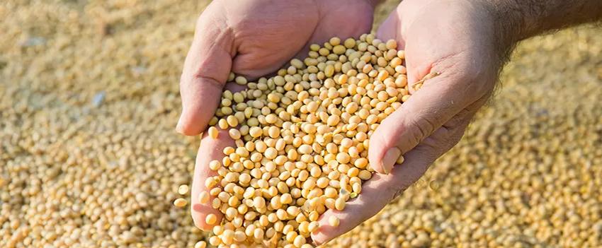 Campo Futuro levanta custos de produção de grãos em SC